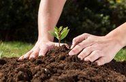 Всероссийская акция «Живи, лес!»