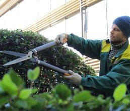 Работаем с растениями каждый день: высеиваем, обрабатываем, стрижем, ухаживаем…
