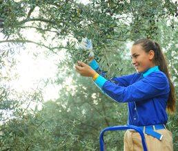 Артековцы собрали более 40 килограммов оливок на традиционном празднике