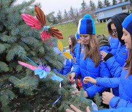 Новогодняя еловая роща в «Артеке» готова к празднику